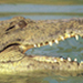 Great Crocodile of the Nile